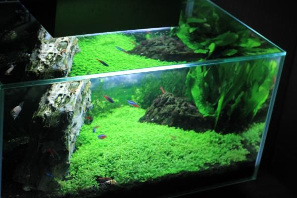 High Quality 12 Gallon Fluval Edge Aquascape   Google Search