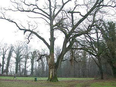 Twee keer sloeg de bliksem op deze eik in nadat deze foto is gemaakt. Op het grasland daarachter stond kasteel Hagmolen dat in de Tachtigjarige Oorlog werd verwoest bij het beleg van Lochem. Deze fraaie natuur bij Bentelo is van landgoed Twickel.