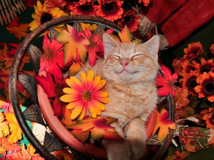 1001 jolies exemples d 39 images d 39 automne pour fond d for Fond d ecran gratuit 974