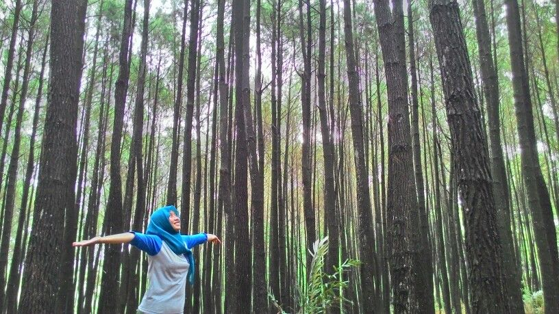 hutan pinus imogiri bantul yogyakarta travelingindonesia explorejogja by vidyaayuu yogyakartaindonesiatraveling