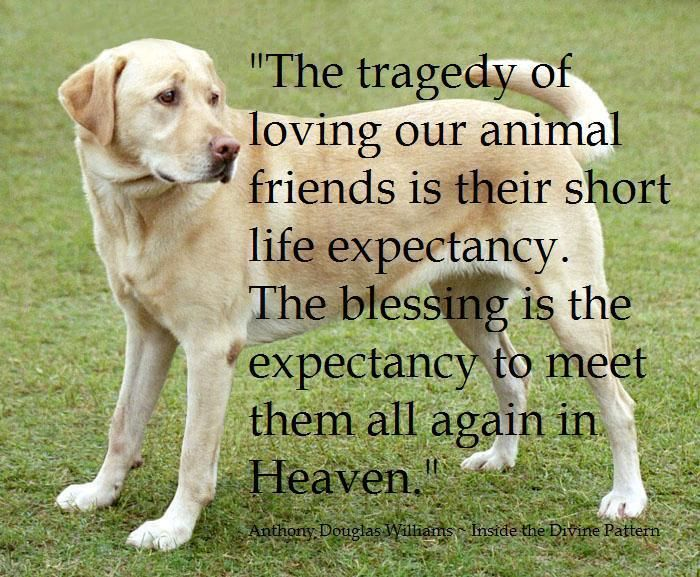 Pin By Stoneartusa Com On Words Of Wisdom Dog Love Dog Quotes Dogs