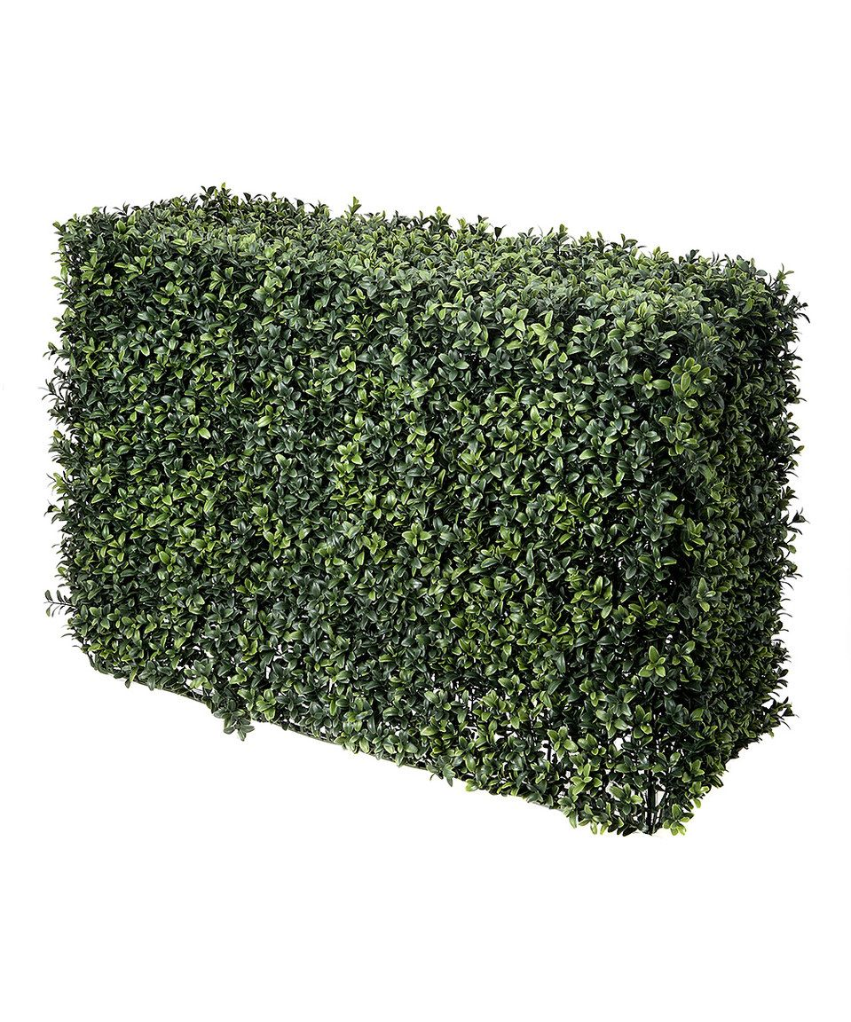 Take A Look At This 30 Boxwood Hedge Today Material