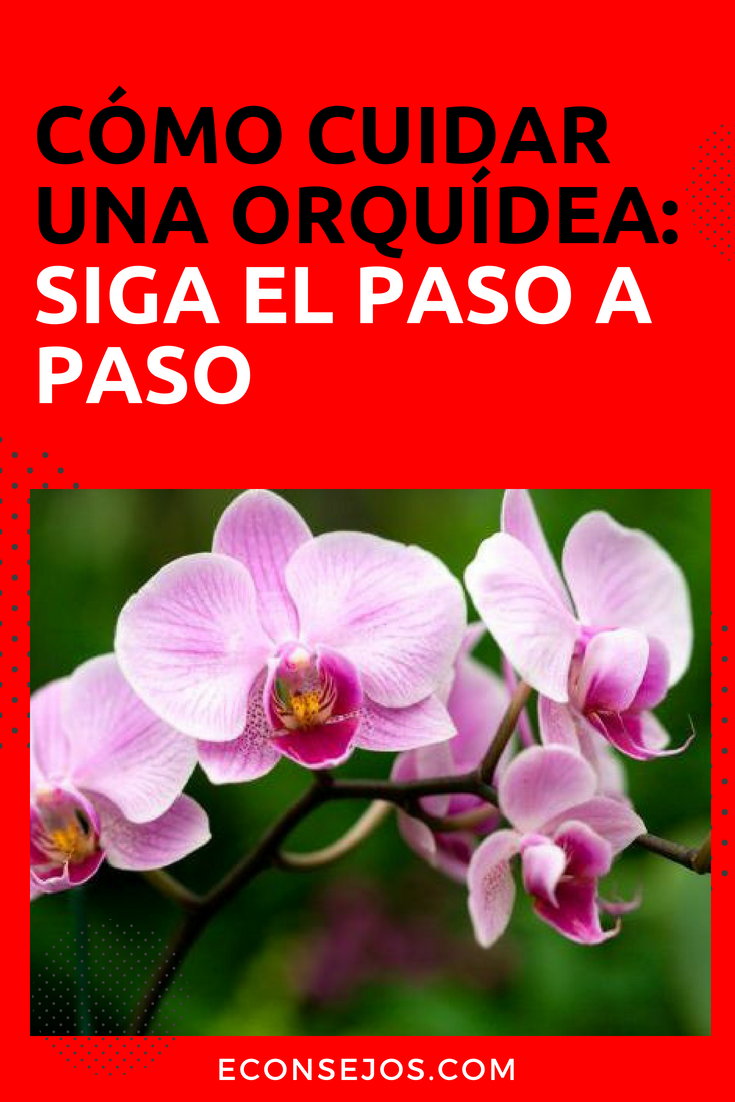C mo cuidar las orqu deas para que florezcan plantas - Como cuidar las hortensias en maceta ...