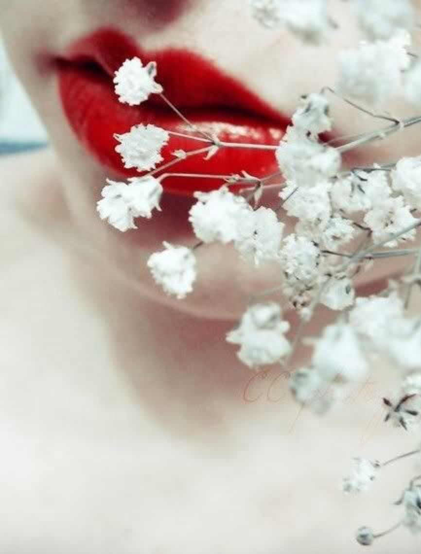 Red Aesthetic Flowers Red Aesthetic White Aesthetic Princess Aesthetic