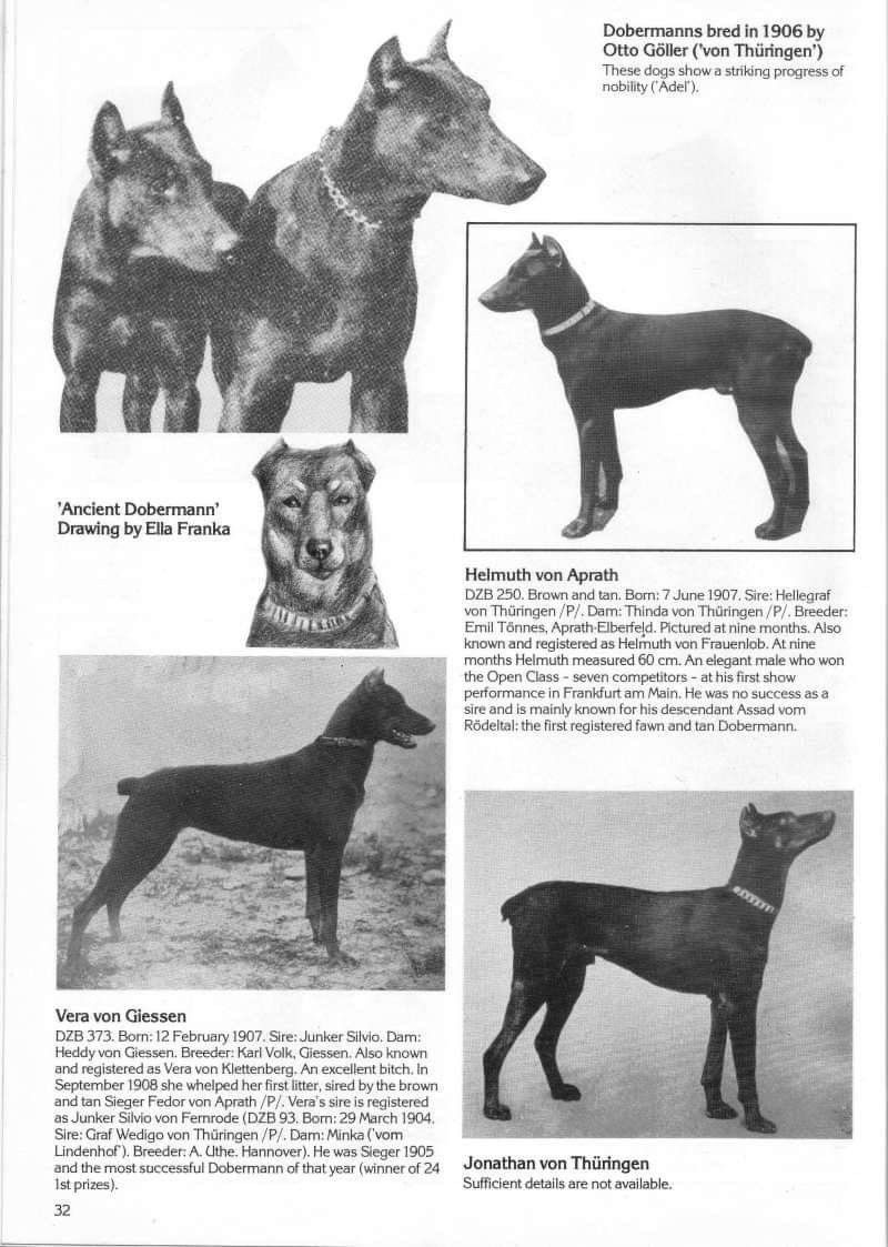 Pin By Jackie Sevalstad On Dogs Dog Show Dogs Animals