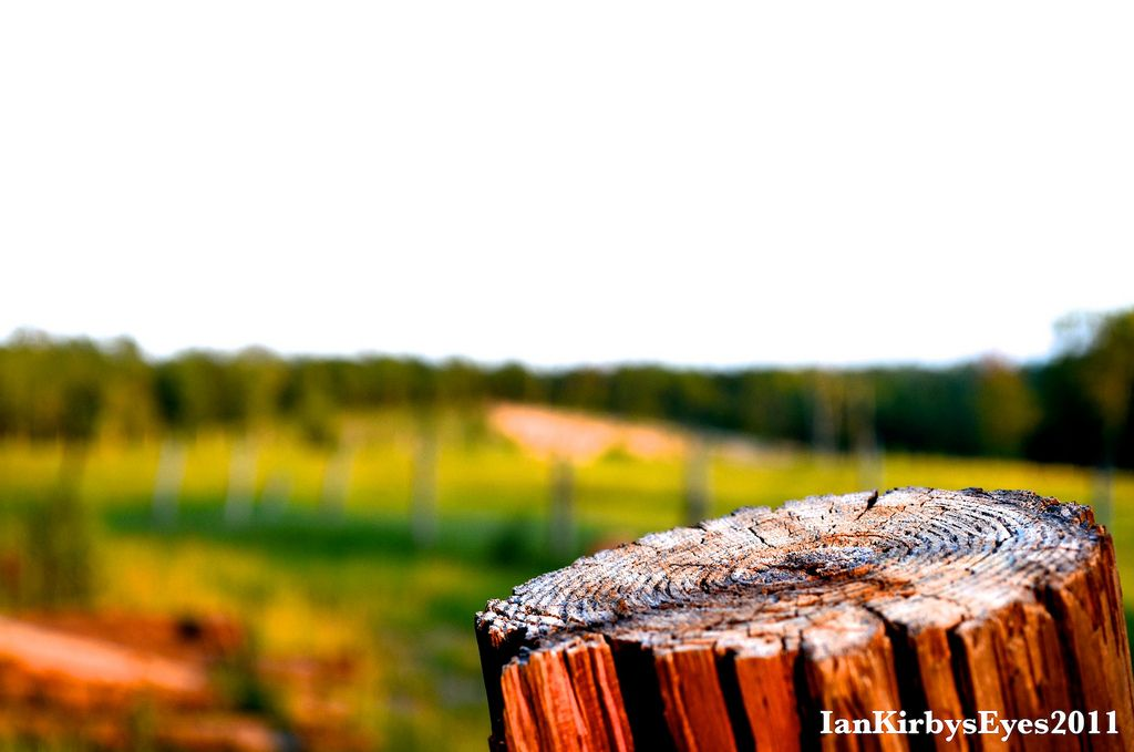 #photography A cracked cedar post and what remains of an old country fence.  #southcarolina