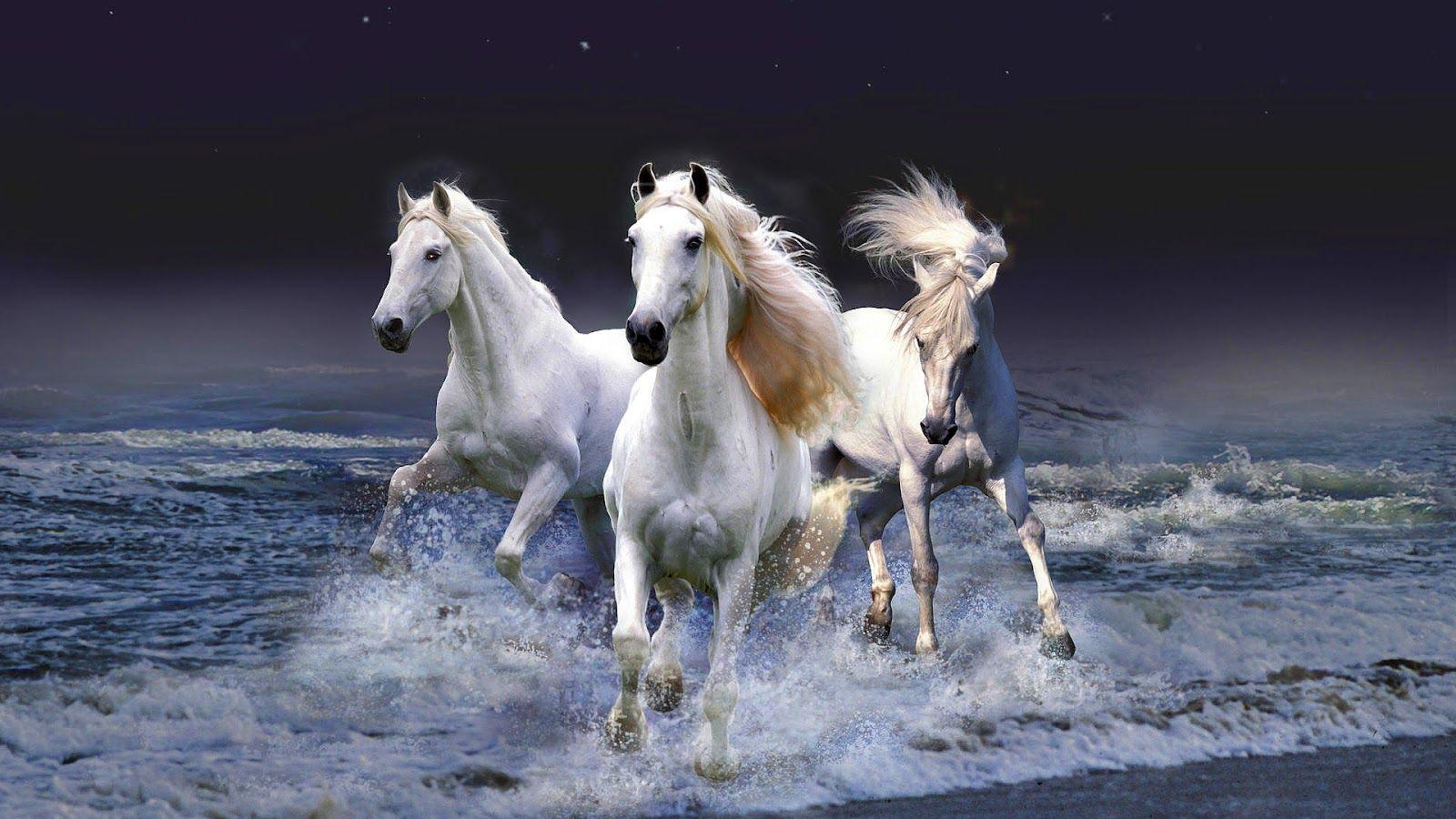 HD Animal Wallpaper Of White Horses Running Through Water Or Sea