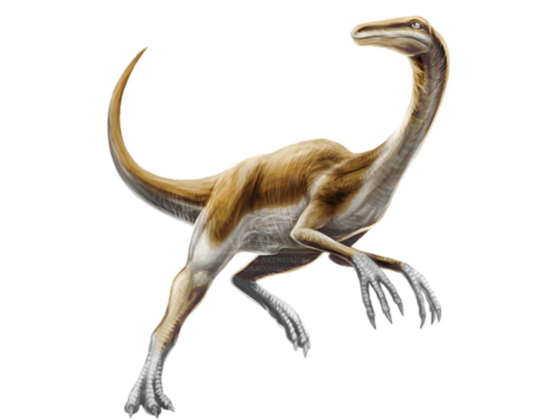 хватает слов, картинка самый быстрый динозавр соевом соусе достаточно