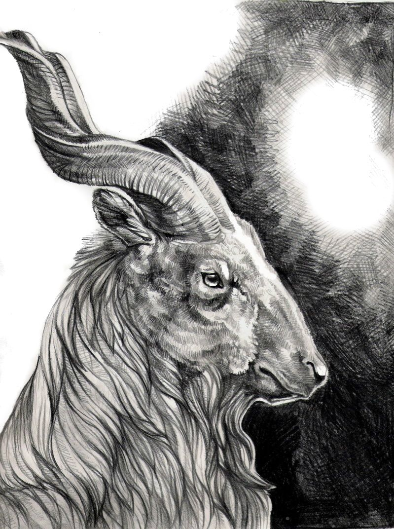 Browsing Traditional Art on deviantART Goats in 2019