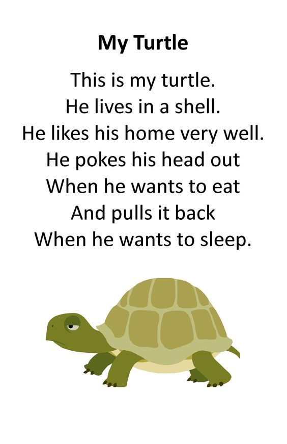 Itty Bitty Rhyme My Turtle Preschool Poems Kids Poems Pets Preschool Theme