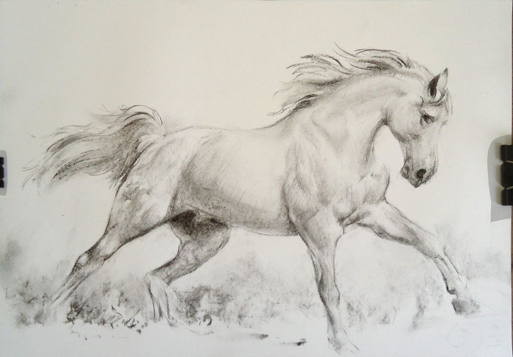 Running Horse Charcoal By Loumizhu On Deviantart Horses Horse