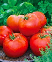 Big Daddy Tomato Hybrid