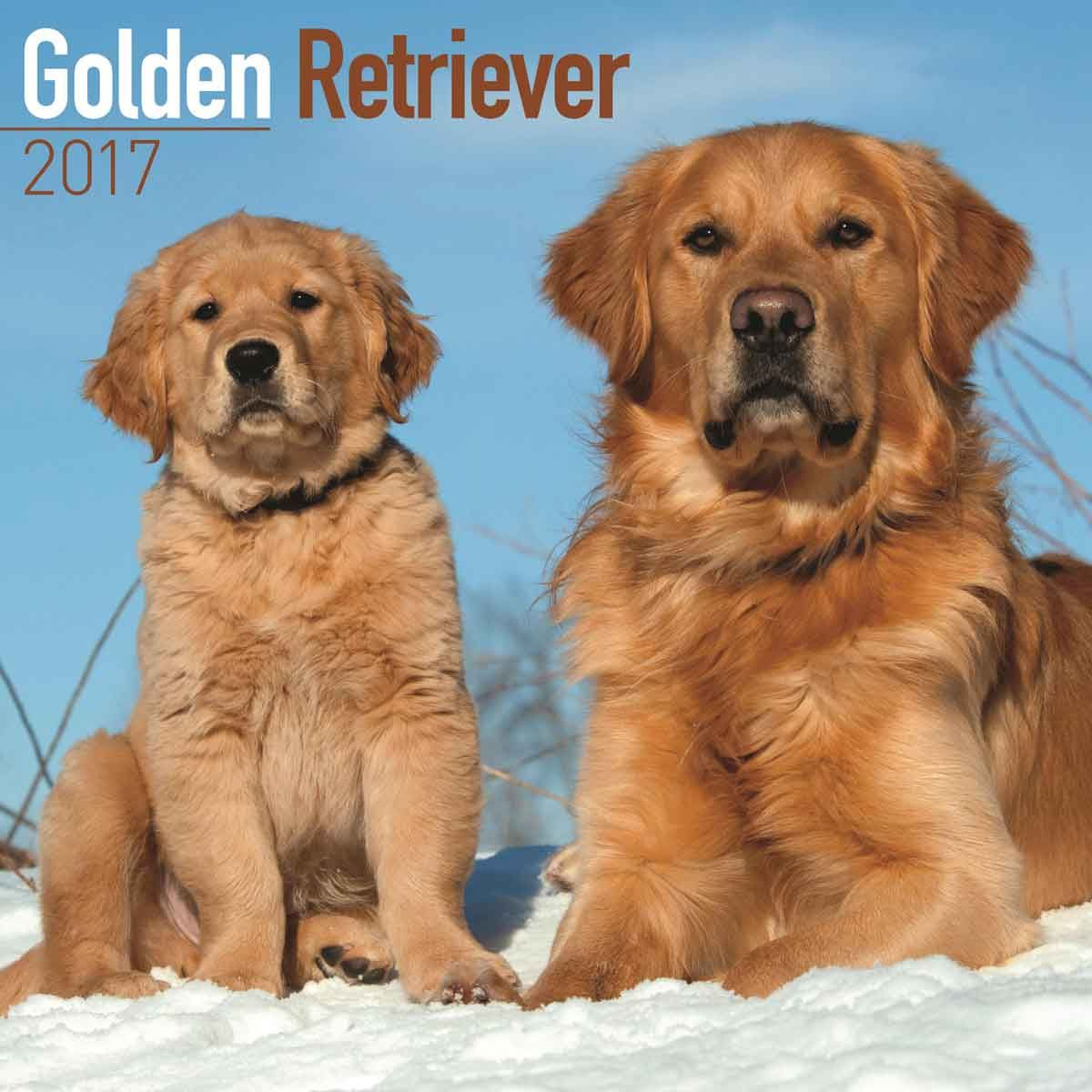 Golden Retriever Calendar 2017 Dog Lover Gifts Dog Lovers Dog Breeds