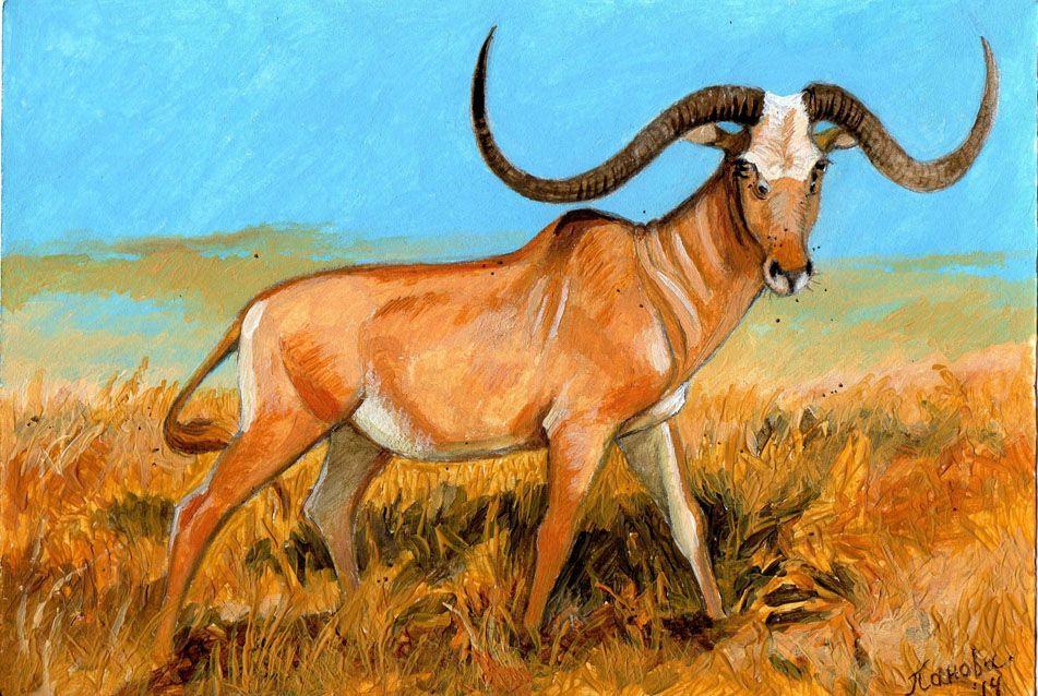Megalotragus | Megalotragus by TORIMORRIS, Africa, about ...