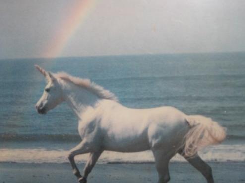 Unicorns + rainbows