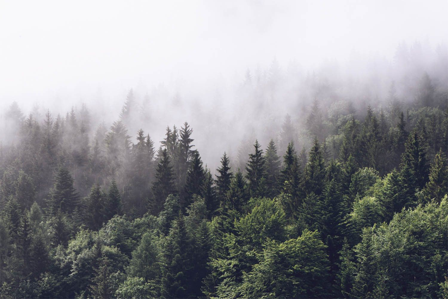 Foggy Forest Wall Mural Misty Gray Mountain Wallpaper Dark