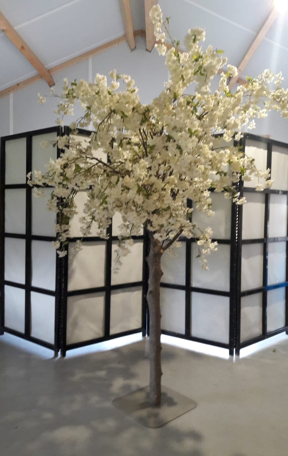 Grote Witte Bloesemboom Op Maat Gemaakt Bloesembomen Bloesem Witte Bloemen