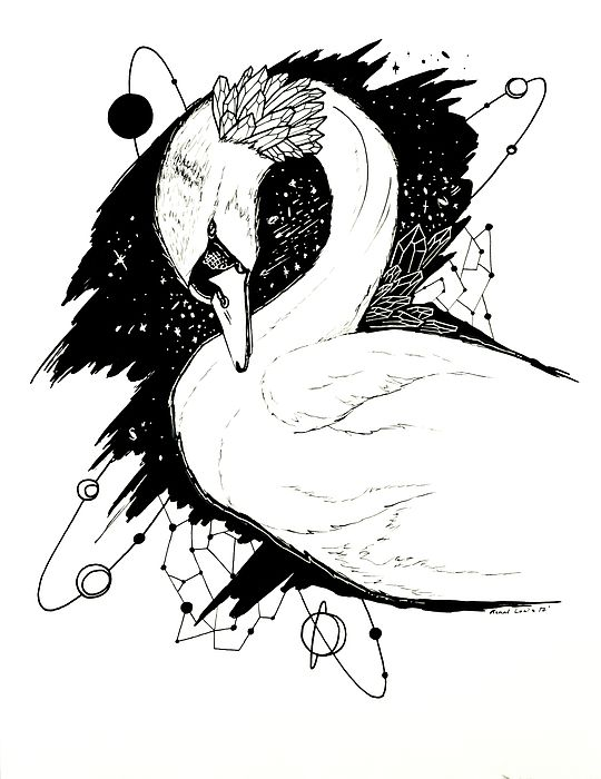The Swan Is A Bird That Is A Symbol Of Beauty Grace Love And