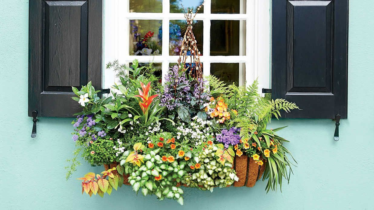 Charm with Window Boxes Add Charm with Window Boxes - Southern Living - Beautiful gardens in miniature—that's the essential appeal of window boxes. No matter if you lack the time, money, or energy to maintain large, sumptuous borders, you can still enjoy colorful flowers and foliage in planters that are small enough to change in five minutes a