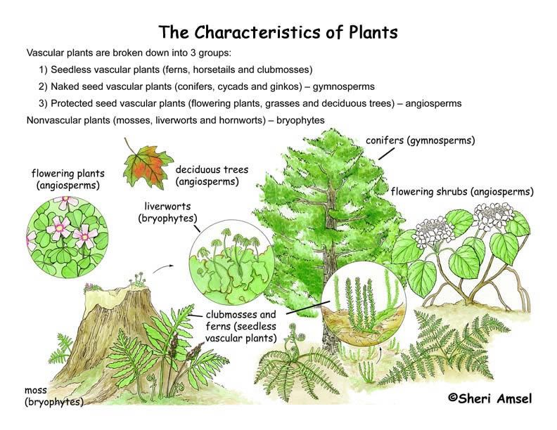 Middle Grades Plants Are At The Basis Of The Food Chain Where
