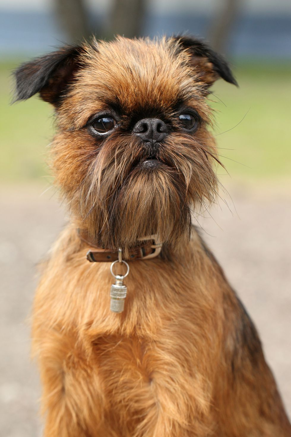 15 Miniature Dog Breeds That Are Just