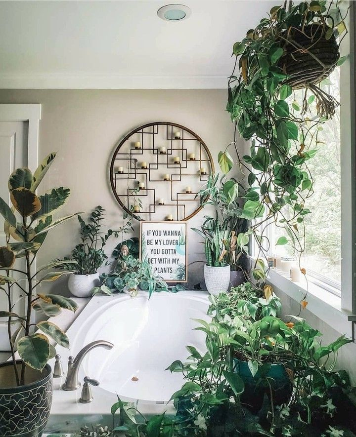 I enjoy long walks down plant nursery aisles, and bubble baths surrounded by my plant babies 🤪🥰 Happy Friday!! We hope you enjoy this fun quote from @bellybaila as much as we did! #moderngarden #moderngardeners #plantlover #longwalks #bubblebaths #crazyplantlady #plantbabys #urbanjunglebloggers #urbanjungle #houseplantcommunity #houseofplantlovers #houseplantplantclub #theleafstrokers #helloplantlady #houseplantopia #girlswithplants #officialplantfever #crazyplantpeople #indoorplantsdecor