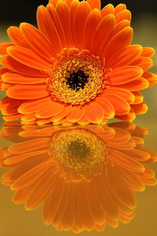 Flower Reflection by John Velocci.