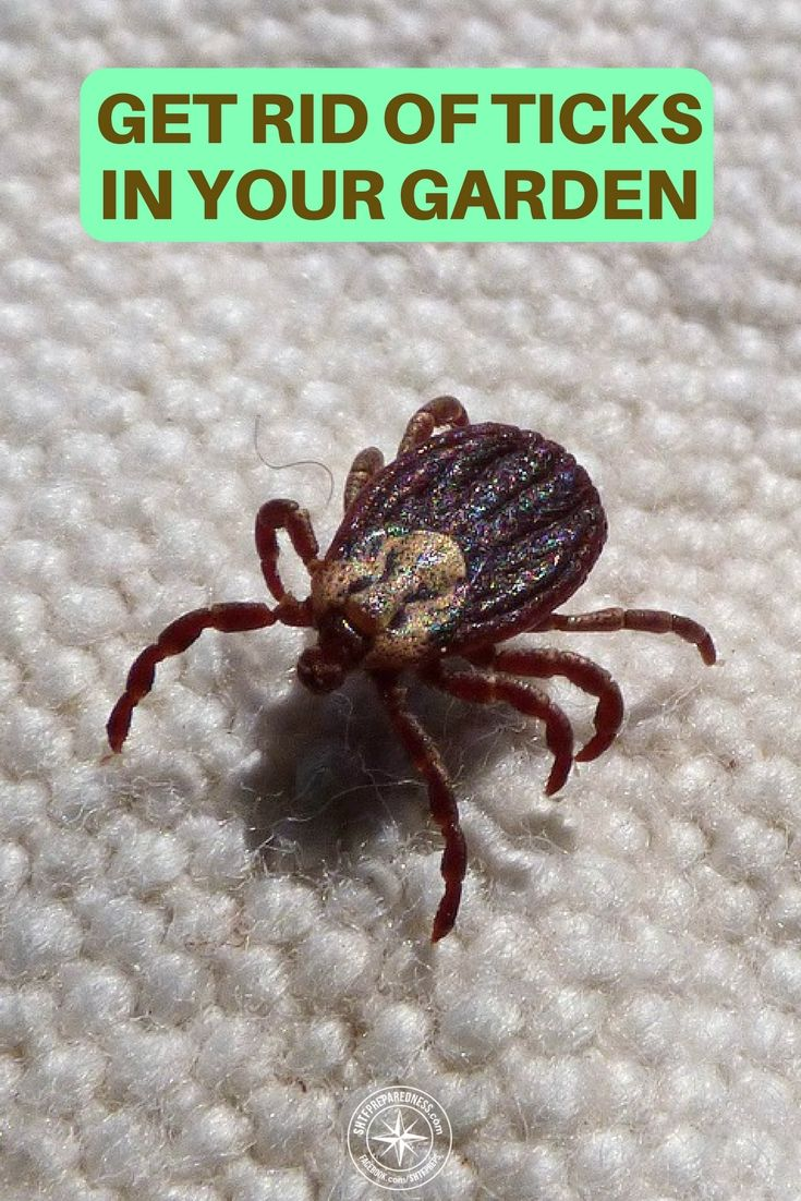 How To Get Rid Of Ticks In Your Garden | Get rid of ticks ...