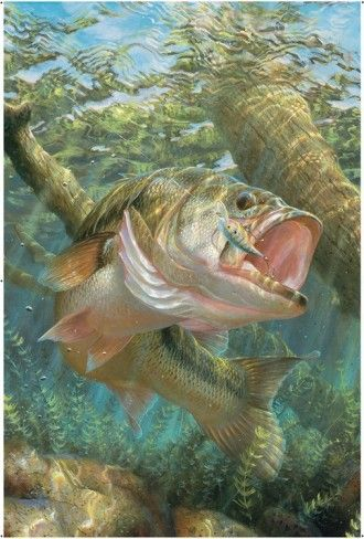 Large Mouth Bass IndoorOutdoor Vinyl Wall Mural House Decor