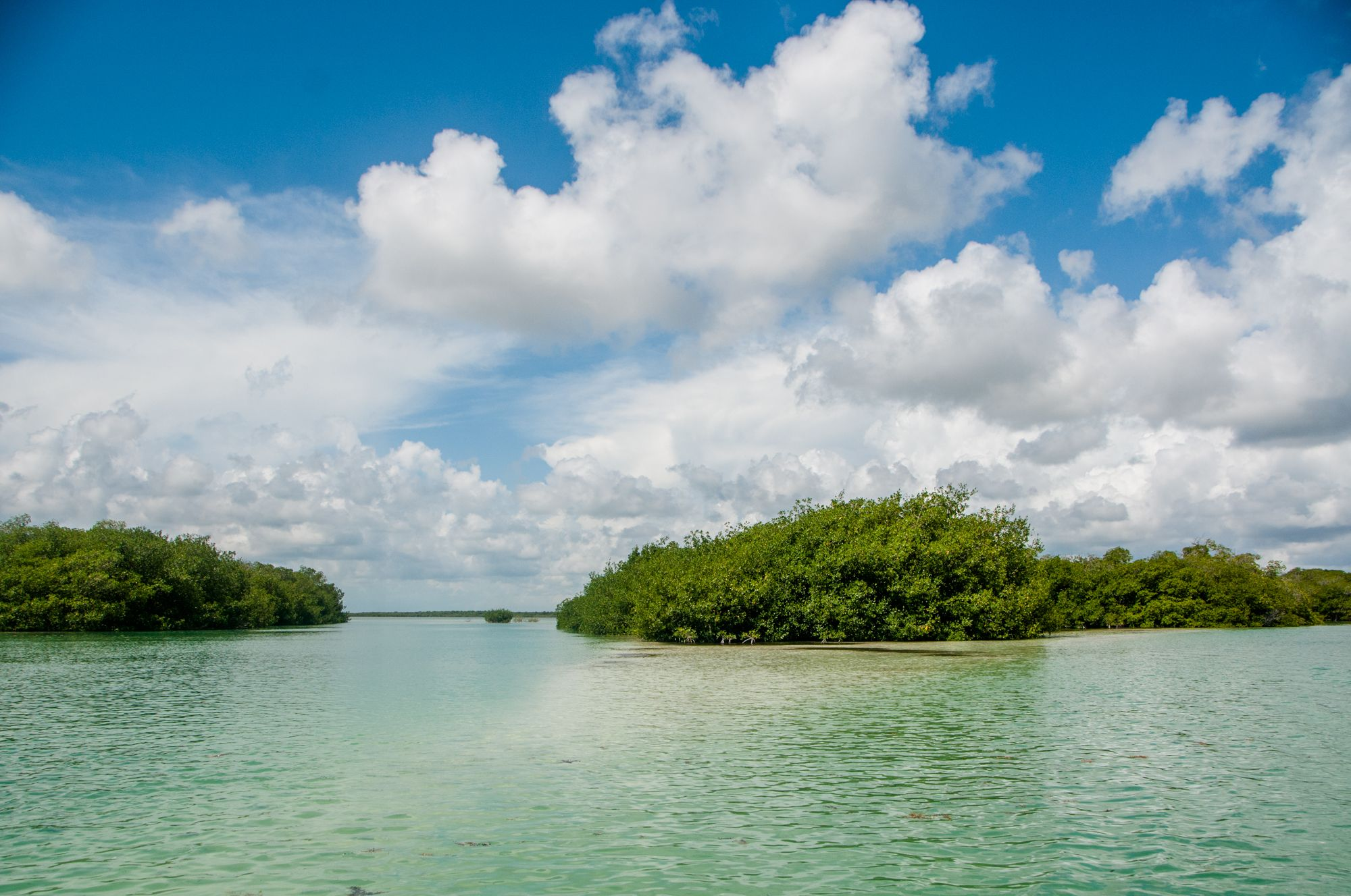 a magical landscape in the sian ka an biosphere reserve on a boat