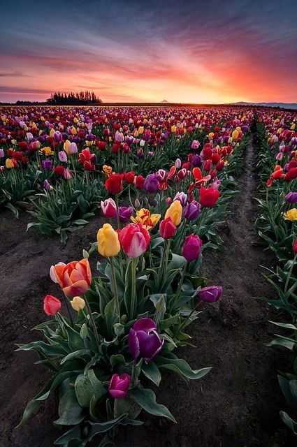 Spring Bouquet, Woodburn, Oregon by thelma