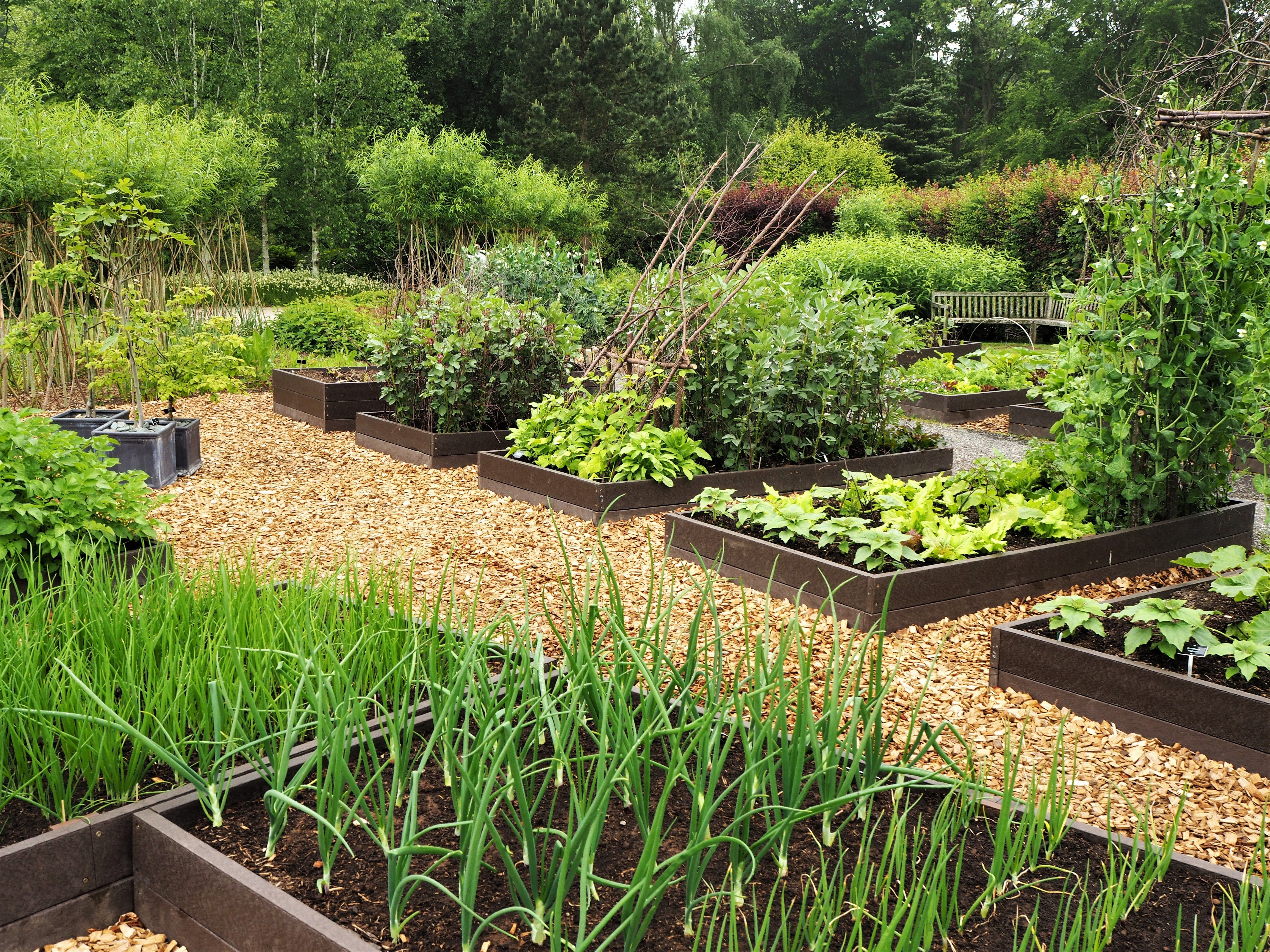 Harlow Carr Gardens, Harrogate - Self Arranged Journeys in ...