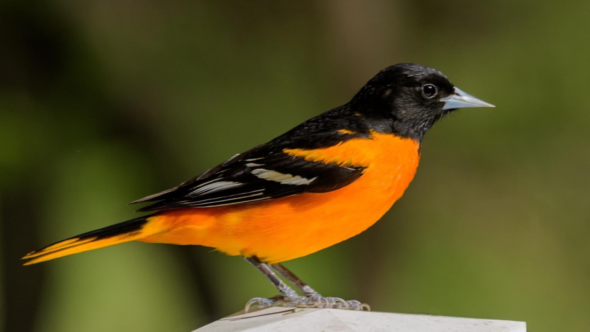 Pin By B On Birds In 2020 Animals Birds Bird