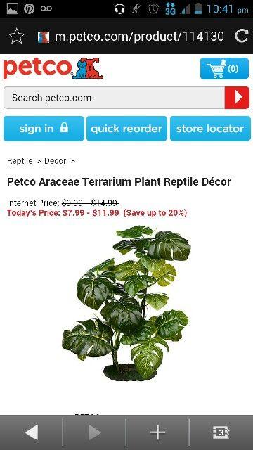Petco Aracease Terraium Plant Reptile The Decor Plants Terraium Petco