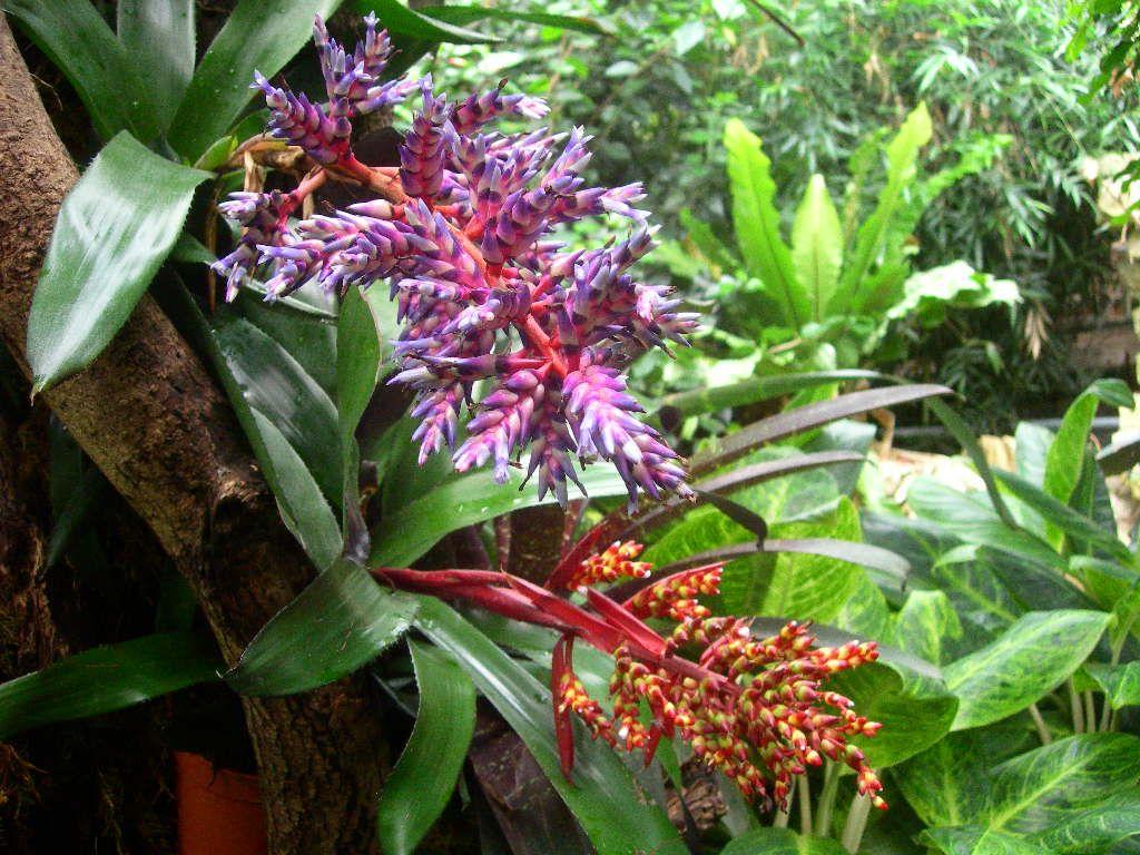 tropical rainforest plants google search cate pinterest