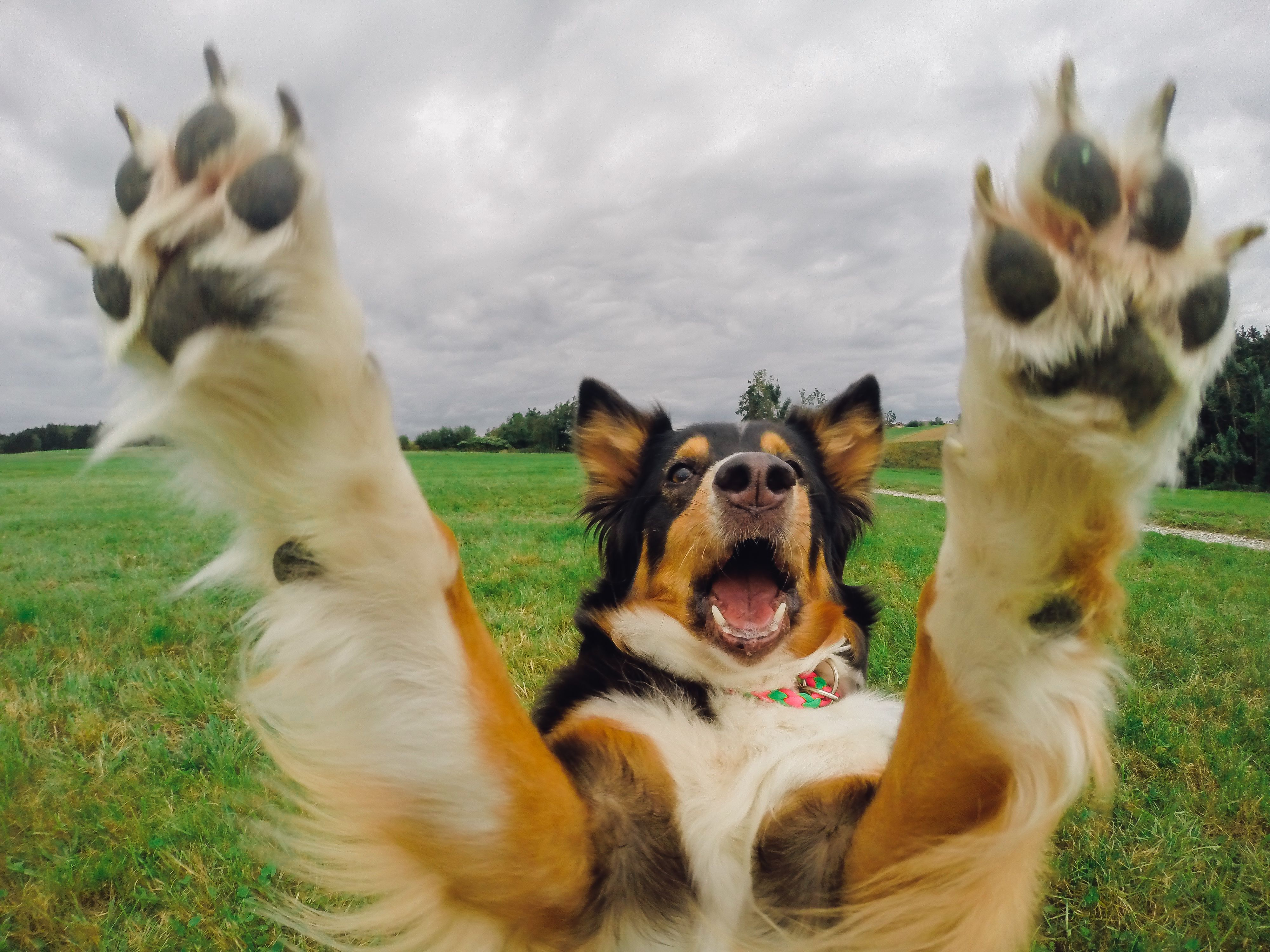 you can run but i will find you gopro dog puppy