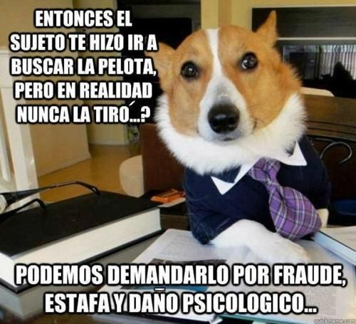 Un perro muy intelectual :) Jajajaja!