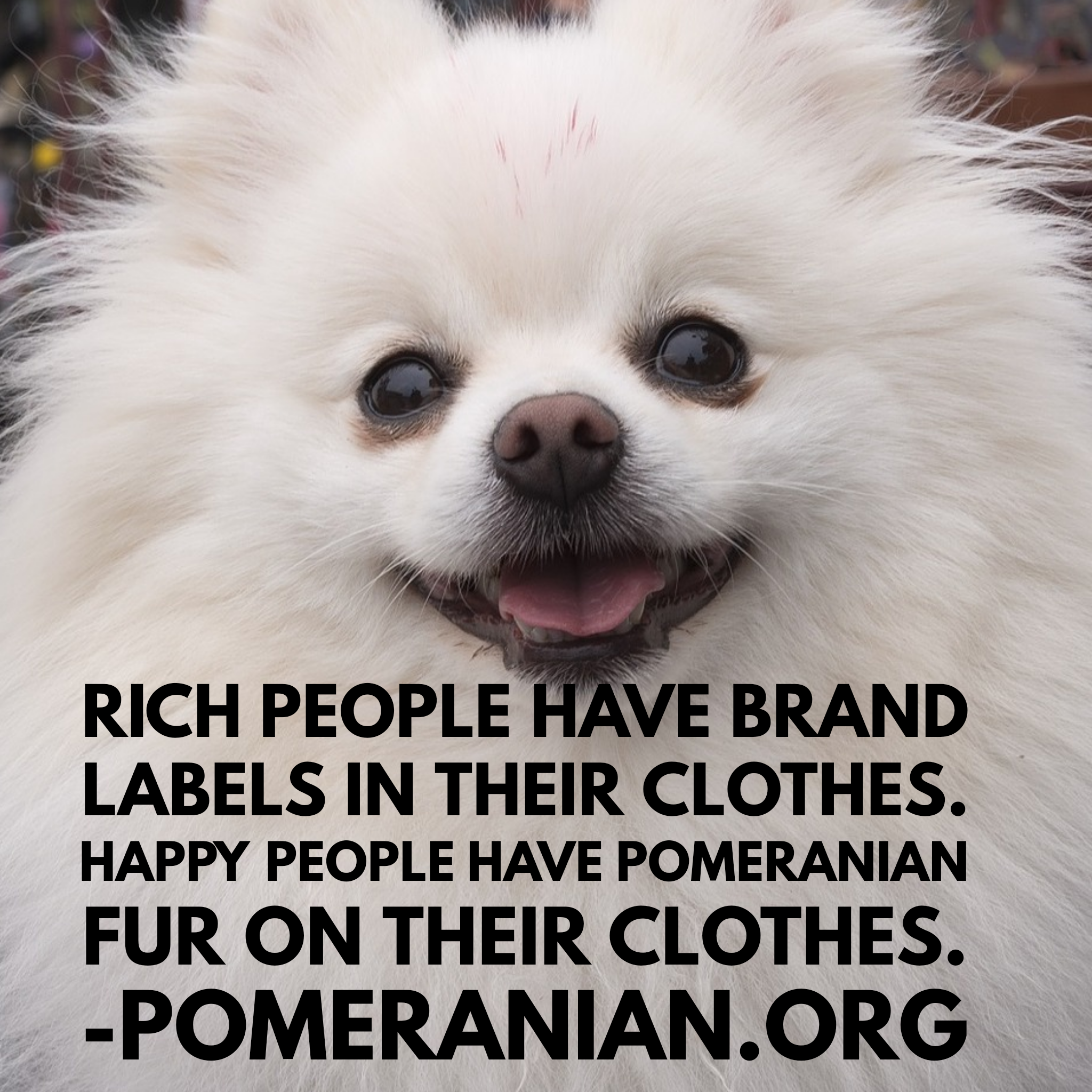 Pomeranian Puppy Quotes Dochlaggie In 2020 Puppy Quotes