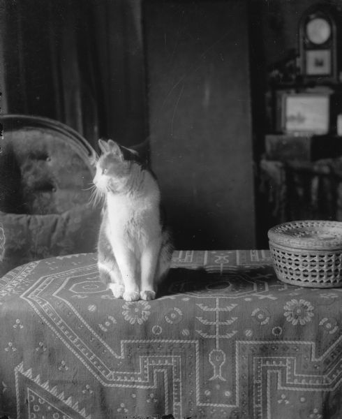 The Middleton family cat, ca. 1910, by Clara Middleton; Madison, Wisconsin.Source: Wisconsin Historical Society.