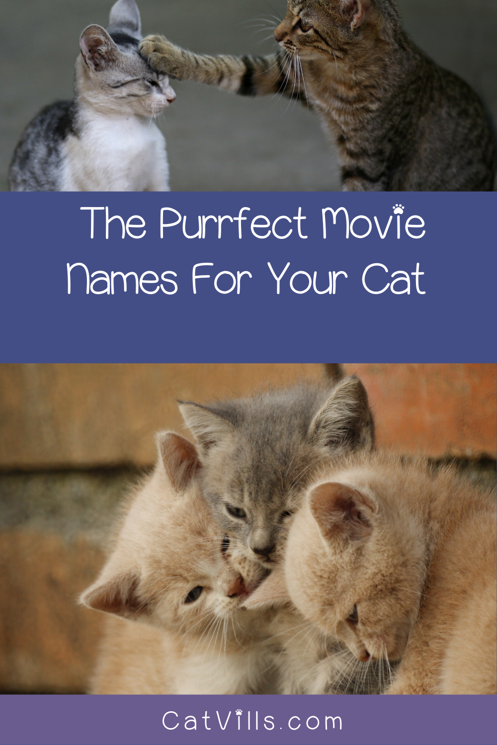 20 Sweet Cat Names from Movies to Inspire You in 2020