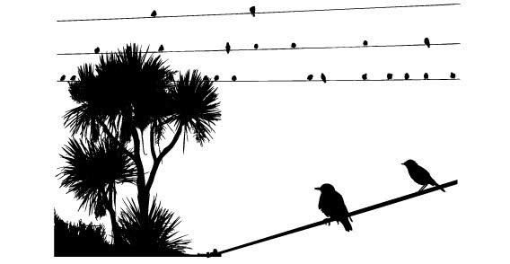 Birds on Electric Wire | Free vector graphics, Bird and Silhouettes