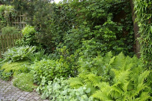 Schattengarten Pflanzen