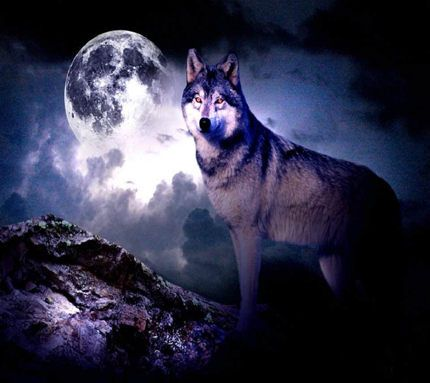 Awesome Wolf Pics