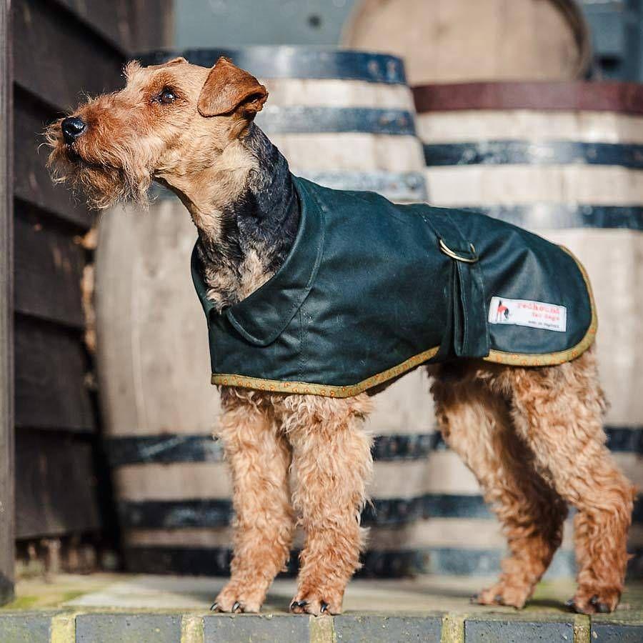 Terrier Waterproof Dog Coat Waterproof Dog Coats Dog Coats Dogs