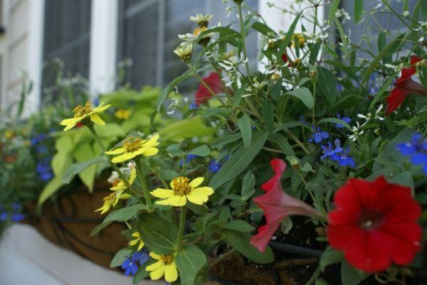 Becherblumen weiße Glocke rote Trichterblume Deko Fenster - deko fenster wohnzimmer