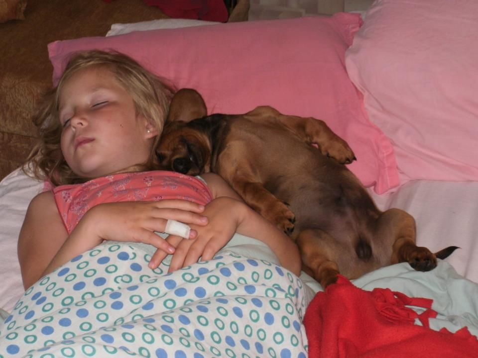 This is such a typical weiner dog sleeping position!