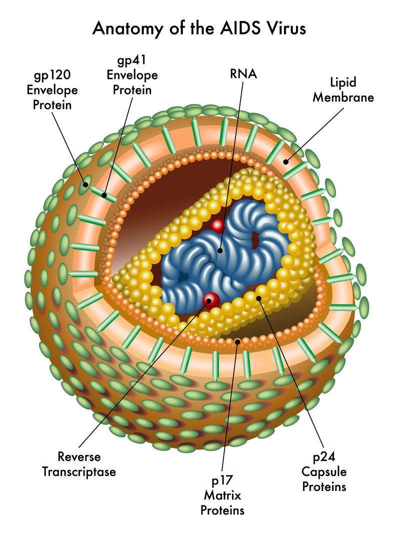 hight resolution of what is hiv and where did it come from learn about how hiv causes aids