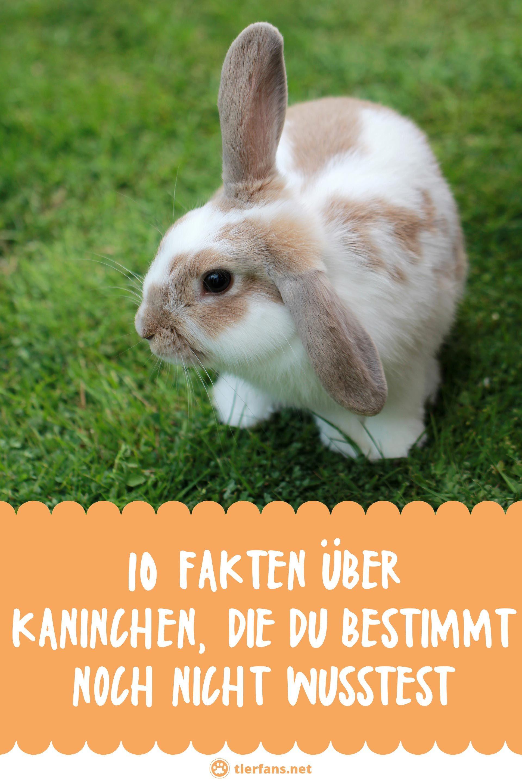 10 Fakten Uber Kaninchen Die Du Bestimmt Noch Nicht Wusstest