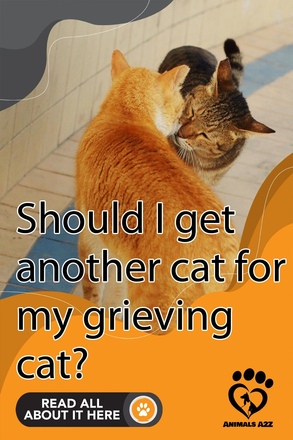 Should I Get Another Cat For My Grieving Cat In 2020 Cat Facts Pet Grief Cat Advice