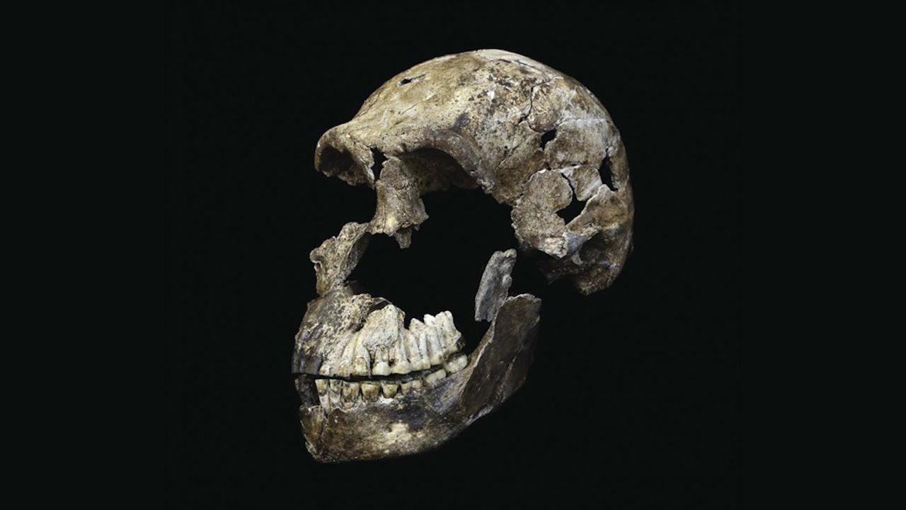 ❝ 'Homo naledi' es más reciente de lo pensado [VÍDEO] ❞ ↪ Vía: Entretenimiento y Noticias de Tecnología en proZesa